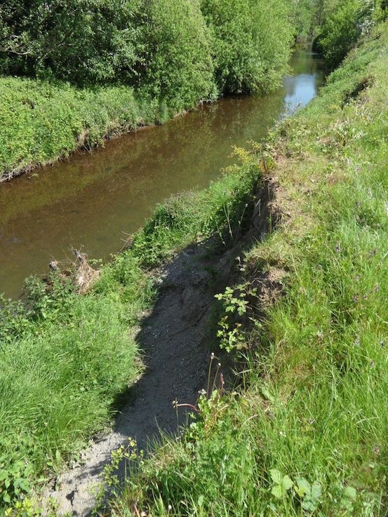 bank erosion no trees to stabilise bank